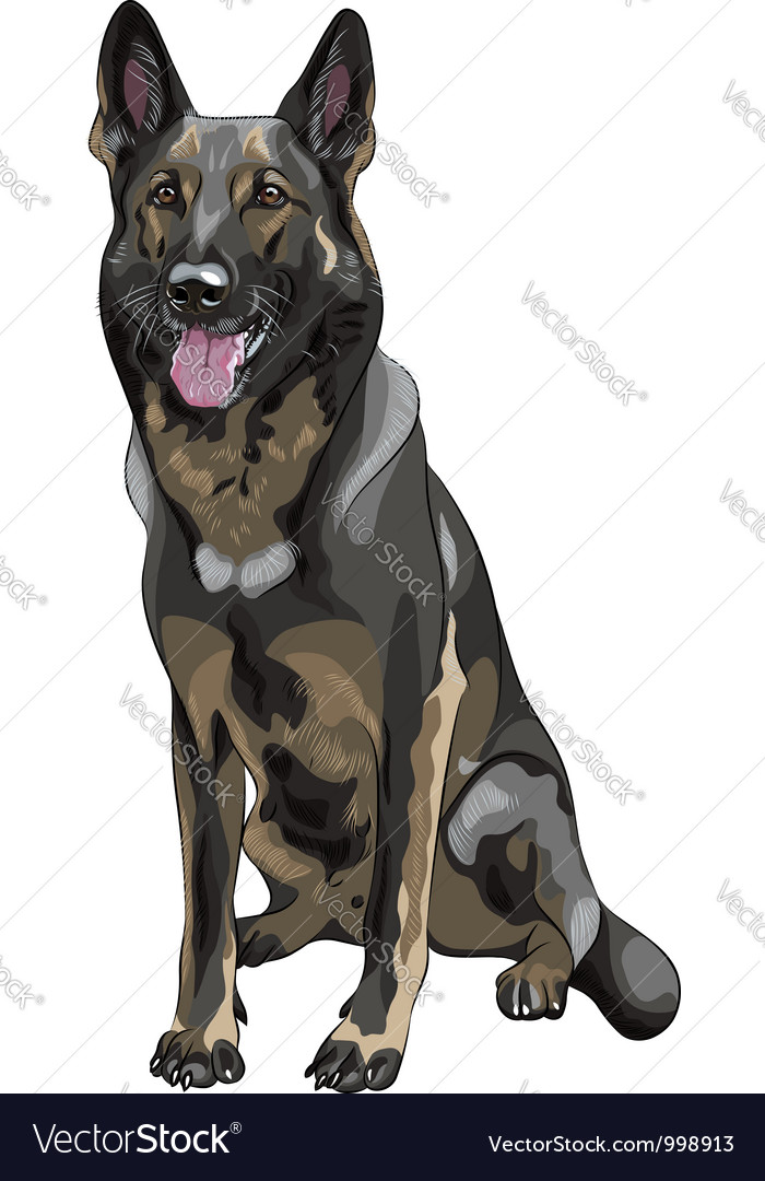 Color sketch black dog german shepherd breed vector