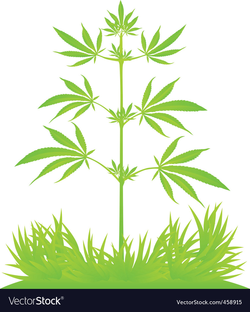 Isolated cannabis plant vector