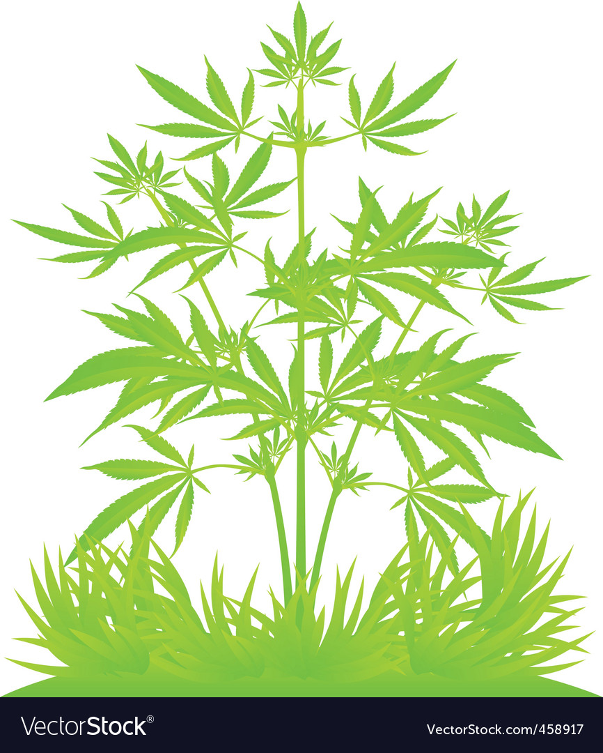 Isolated cannabis plants vector