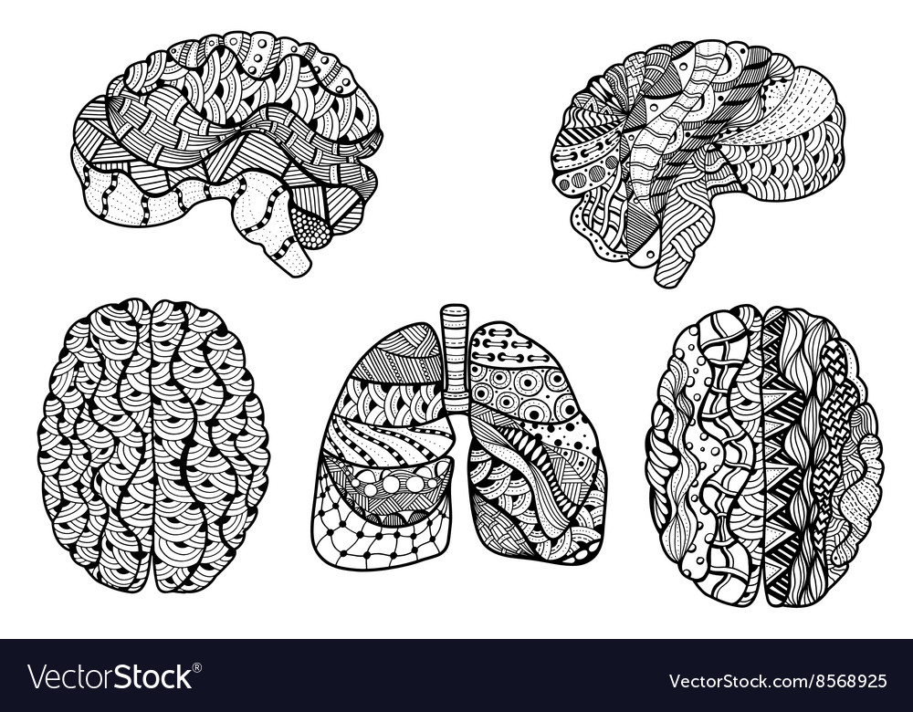 Human brain and lungs vector