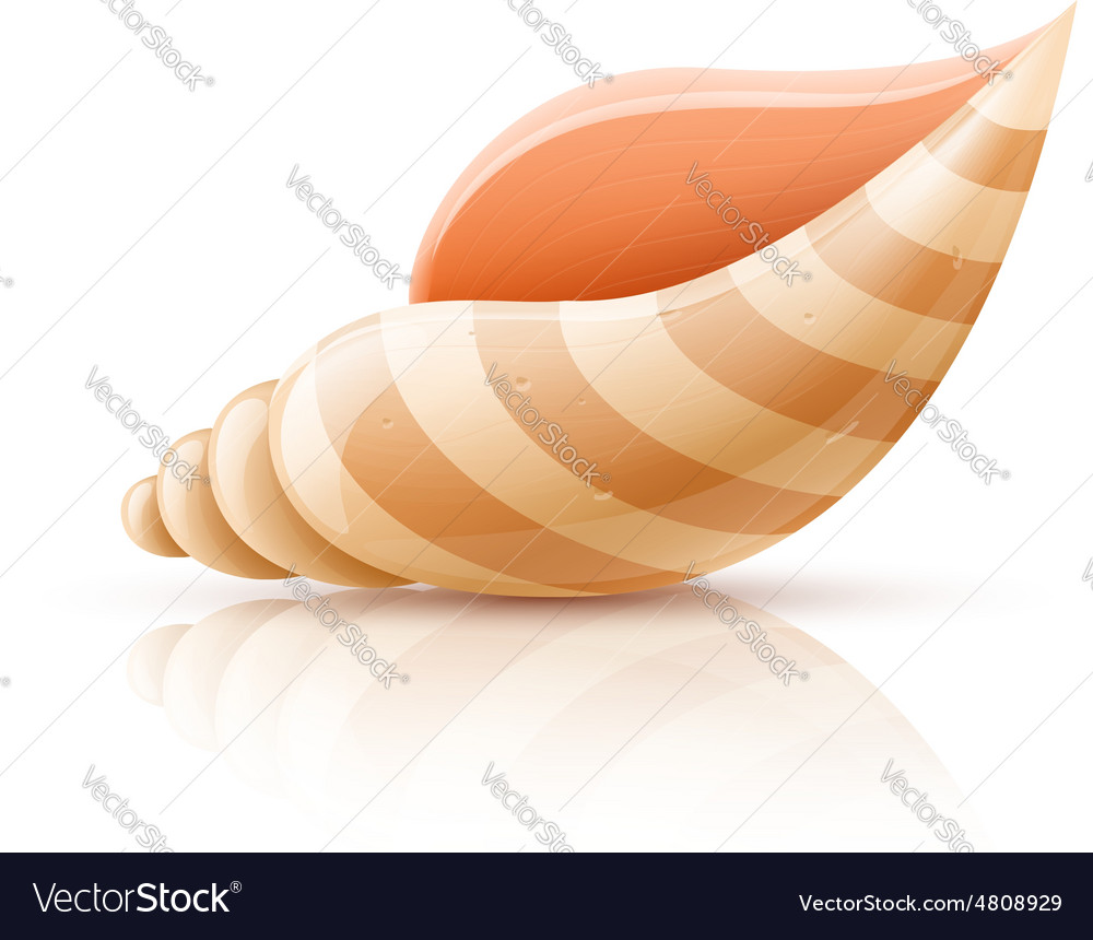 Seashell shellfish isolated vector