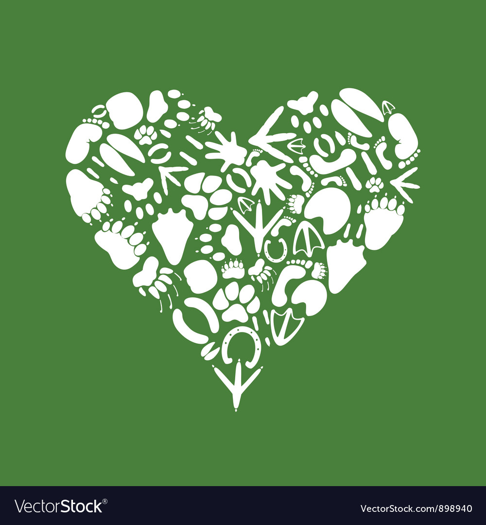 Heart of an animal vector