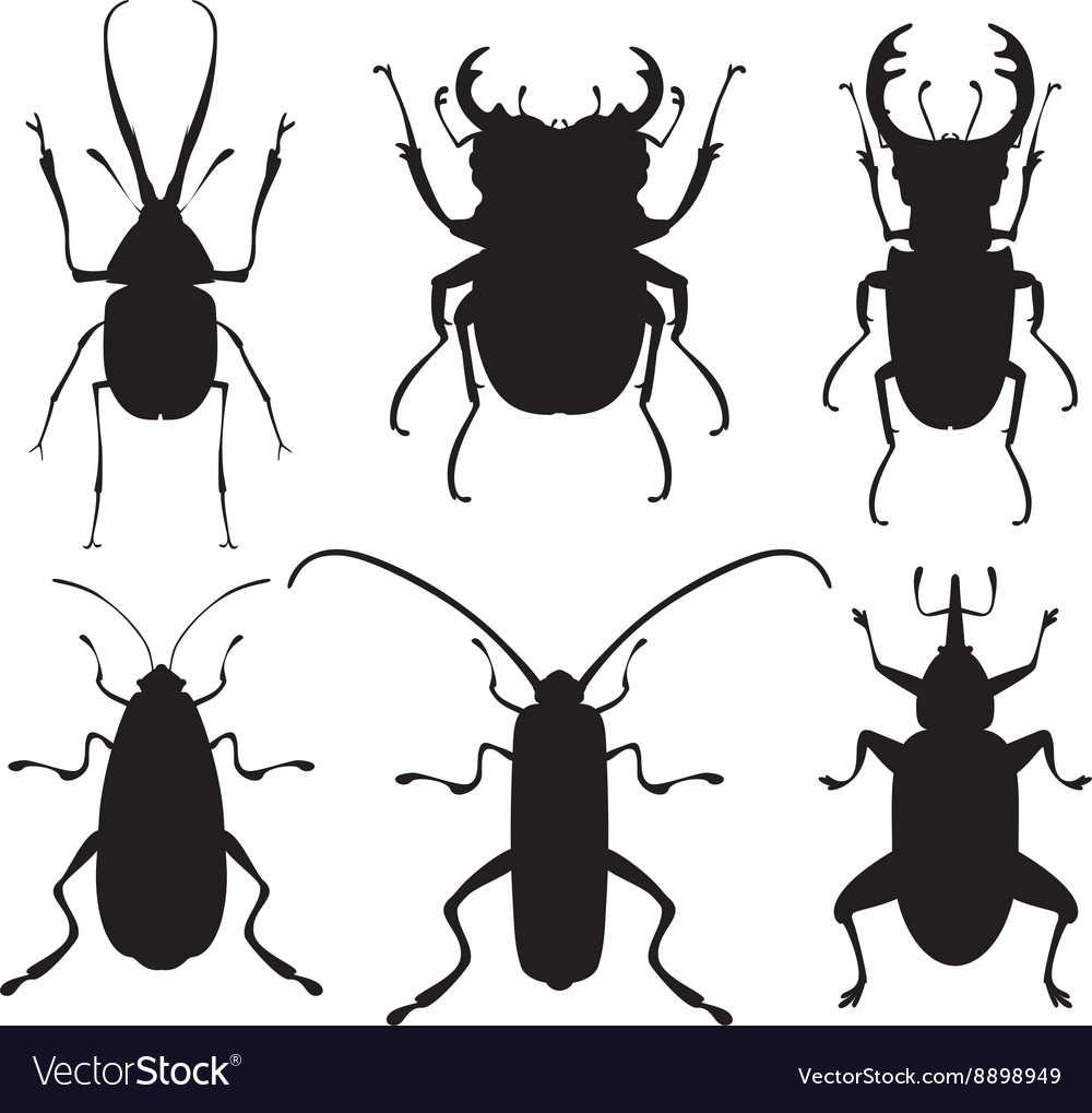 Bug icons insect set vector