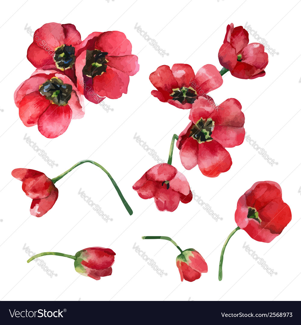 Set of tulips vector