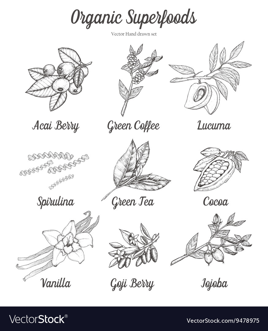 Organic superfood set vector