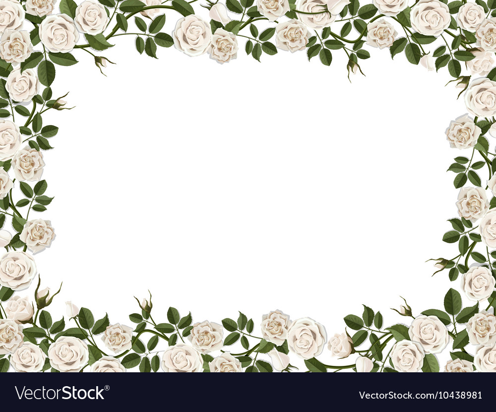 Square border of white roses vector