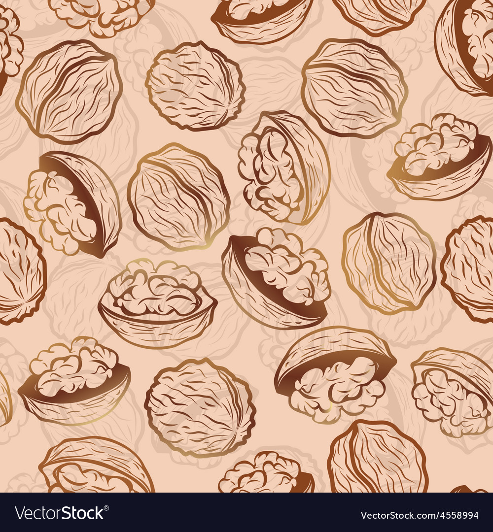 Walnut seamless pattern vector