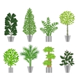 Big trees house plants collection vector image
