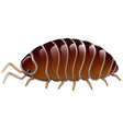 A woodlouse vector image vector image