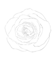 black and white rose isolated on white vector image vector image