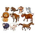 Wild animals in various types vector image