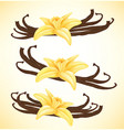 vanilla flower and pods isolated objects vector image