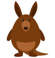 fat kangaroo on white background vector image