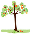 tree with fruit vector image