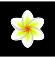 frangipani flower isolated vector image