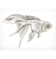 Gold fish sketches vector image vector image