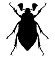 Cockchafer silhouette vector image vector image