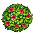 Red flowers on round bush vector image