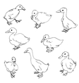 sketch of ducklings vector image
