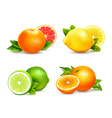 Citrus Fruits 4 Realistic Icons Set vector image