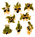 green and black olives and olive oil icons vector image