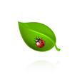 Red ladybird on green leaf vector image