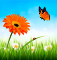 Spring background Orange beautiful flower and a vector image