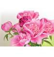 peony flowers bouquet springtime fresh natural vector image