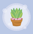 cute succulent plant in pot vector image