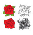 flower rose isolated on white background vector image