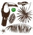 Hand drawn tropical set vector image vector image