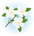 branch of a tree with white flowers vector image