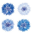 floral bloom set flower cornflower summer nature vector image