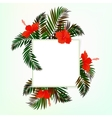 Square card with palm leaves vector image