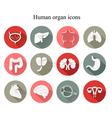 Set of human organs flat icons vector image