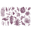 hand drawn tropical leaves flowers and flamingo vector image