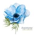Anemones vector image