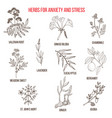 anxiety treatment herbs collection vector image