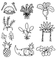 Vegetable element thanksgiving set doodles vector image