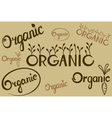 organic lettering vector image