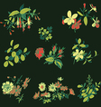 Meadow flower and leaf set isolated on black vector image