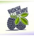 Blackberry still life vector image