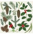 Set with Christmas plants Botanical Branch vector image