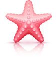 Starfish sea star isolated vector image