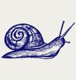 Garden snail vector image vector image