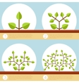 Dichotomous branching plants banner vector image