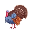 Thanksgiving isolated turkey color sketch vector image vector image