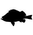Rose fish Silhouette vector image