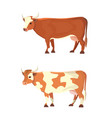 set of different cows isolated colore vector image