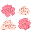 Peony pastel flowers collection isolated on white vector image